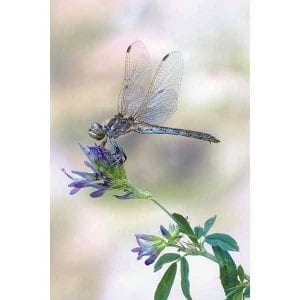 Art-Rentals-Botanical-29-3