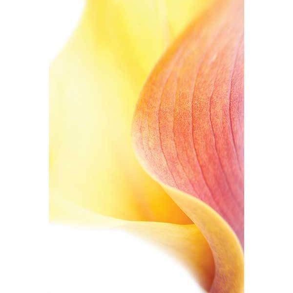 Art-Rentals-Botanical-6-3