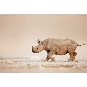 Art-Rentals-Wildlife-52-3